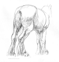 Backside of a Clydesdale, Sheridan College, 2006, graphite pencil.