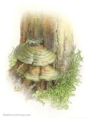 "Found on a dead tree stump in Wellington County, Ontario, this specimen became my first fungus illustration. It won an award from the Puget Sound Mycological Society, one of the largest mycological societies in the USA. Watercolour & ink, 14""h x 10""w. ©Kathryn Chorney (original in private collection)"