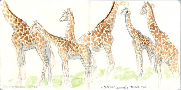 Giraffes at Toronto Zoo