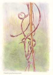 """First in a series of three studies of this species, found Nov 2012 in the Hockley Valley north of Toronto. I was fascinated to see the dry leaves curled into such fantastic geometrical shapes. Watercolour, casein, acrylic, 13.5""""h x 10.5""""w. ©Kathryn Chorney"""