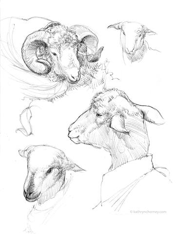 RWF - Ewe and Ram Head Studies 2014, ballpoint ink.