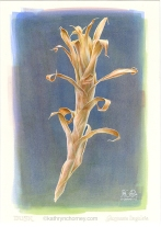 "Dusk ... This dried bromeliad stem was something I rescued from a colleague's desk, and placed in a holder by the window in my office at the college. One late afternoon in the fall, I walked in and caught sight of it against the darkening sky. Watercolour, casein, acrylic, 12"" x 6"". ©Kathryn Chorney"